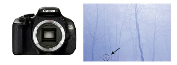 Как чистить цифровой зеркальный фотоаппарат от компании Canon