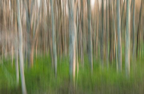 Абстрактные фотографии природы